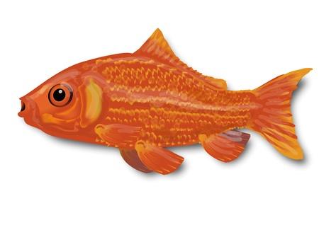golden fish: Little goldfish Illustration