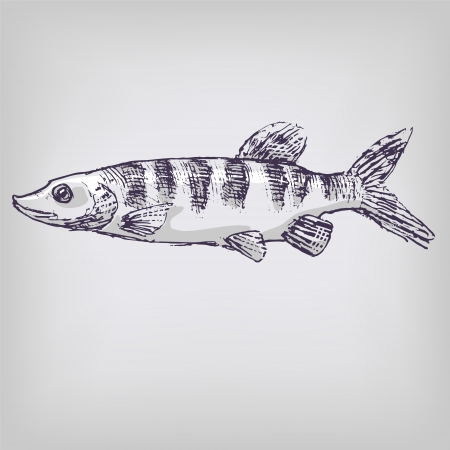 Drawing pike Vector