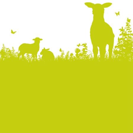 and sheep: Ovejas en el prado Vectores