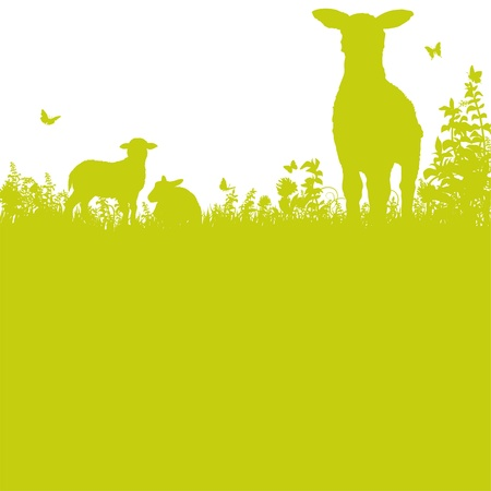 Sheep on the meadow Stock Vector - 18752947
