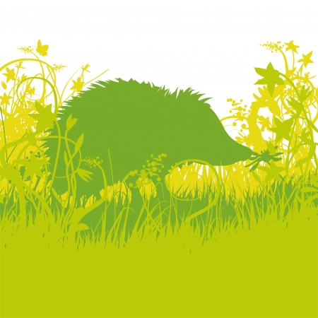 Young hedgehog in the undergrowth Vector