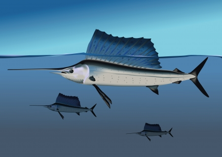 Marlins in the ocean Vector