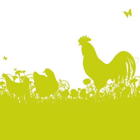 Chicken and rooster Vector