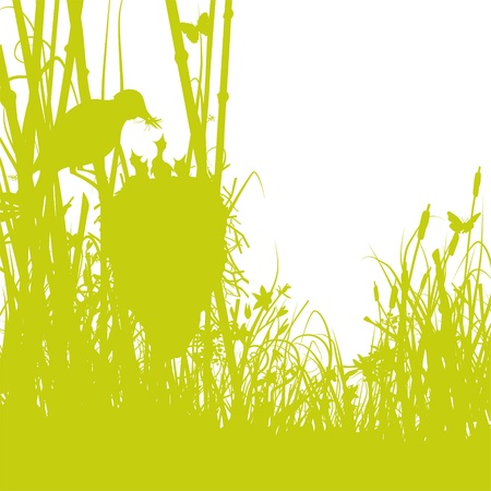 biotope: Birds nest in the reeds Illustration