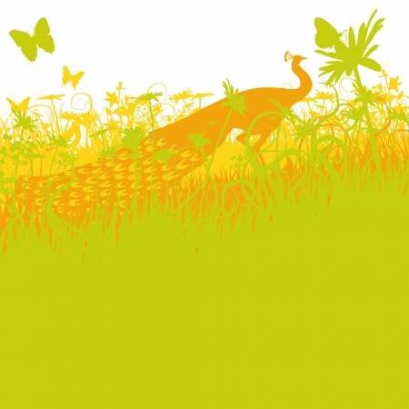 Peacock in the thicket of a park Stock Vector - 19902190
