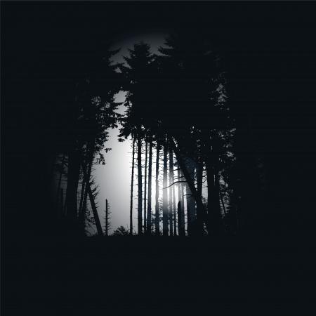 schein: Dark spruce forest at night