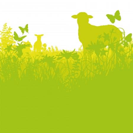 and sheep: Corderos en la pradera