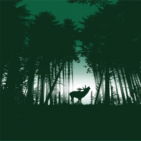 Deer in the spruce forest at night Vector