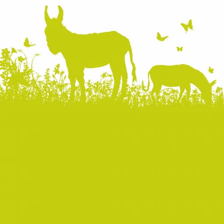 Donkey on pasture Illustration
