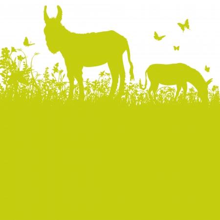 Donkey on pasture Illustration
