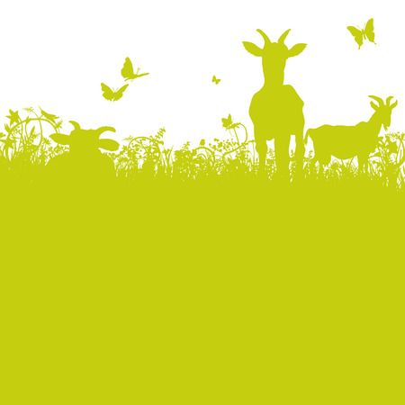 Goats on the meadow Vector