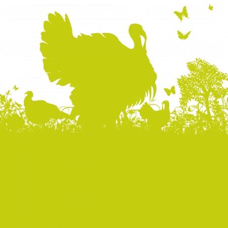 dissemination: Turkey in the garden