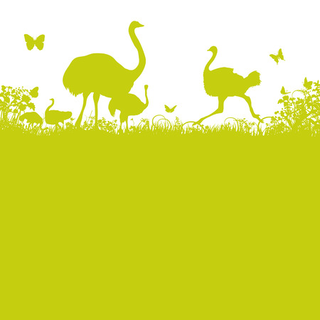 freewheel: Ostrich and ostrich herd  Illustration