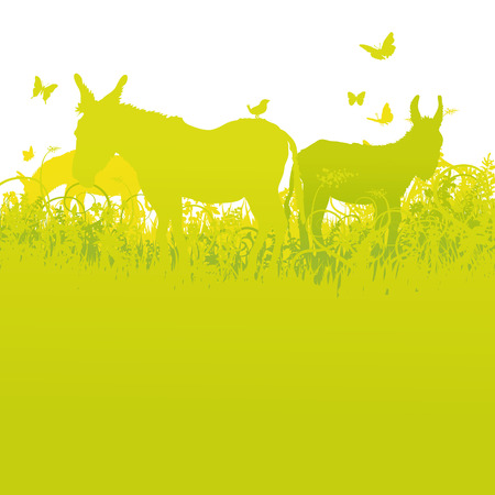 fortunately: Three donkeys on the summer meadow