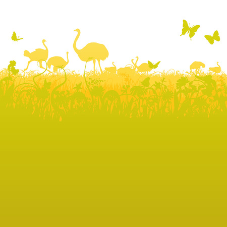 Ostrich and ostrich herd  in the savannah  Vector