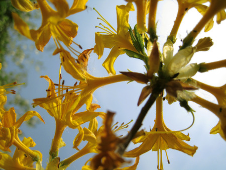 fortunately: Yellow flower in the backlight