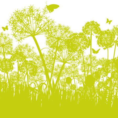 scrub grass: Allium in the meadow