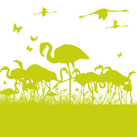 flamingi: Flamingi w stawie