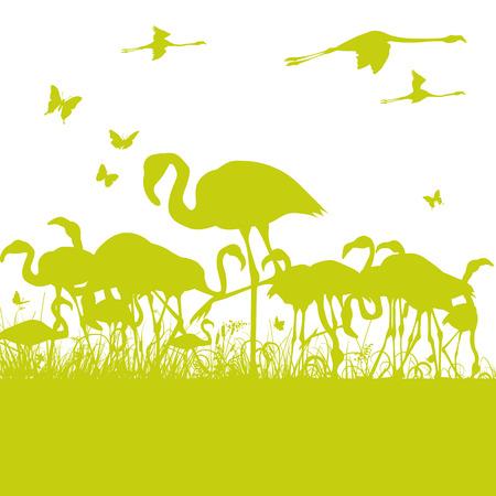 flamingos: Flamingos at the pond Illustration