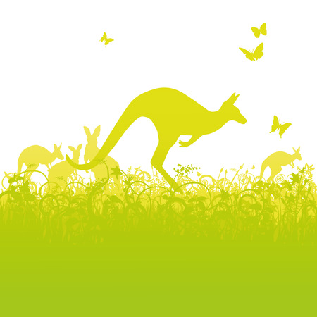 animal in the wild: Jumping kangaroos in Australia