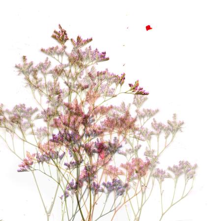 dried flower arrangement: Waving bush