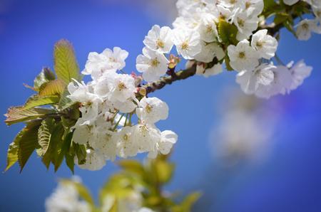 bush to grow up: Blossom