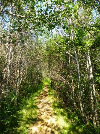 solver: Path through a small forest