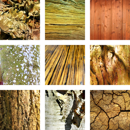 cultural history: Nine images of wood and tree structures