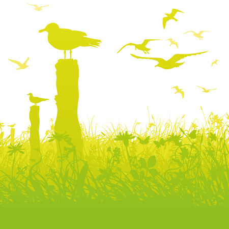 Seagulls in the swamp and tall grass Illustration