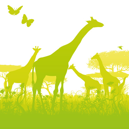 Giraffes in a forest in africa