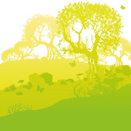 Old olive trees on a hill Illustration