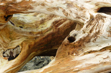 Old wood root on the beach