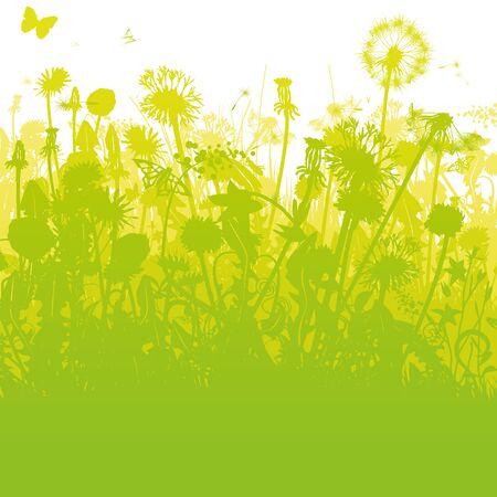 Dandelions in an overgrown, green garden