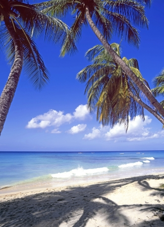 Barbados Caribbean sea beach palm trees and blue sky photo