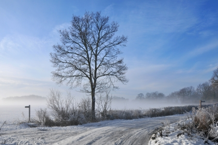 Mist over snow covered fields with winter tree silhouette UK photo