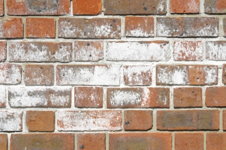 white brick: Efflorescence salts on surface of brick wall