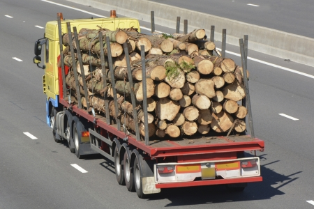 sawn: Truck with articulated trailer carrying sawn lengths of tree trunks travelling along motorway
