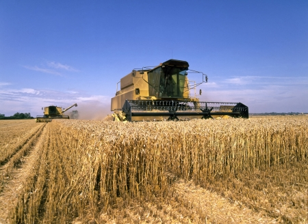 harvesters: Two combine harvesters at work in corn field Stock Photo
