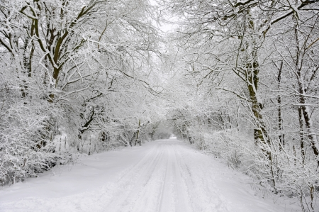 beautiful woodland: Winter snow covered country lane through woodland trees