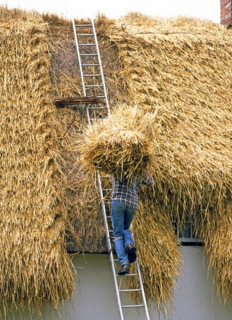 thatcher: Carrying bundle of thatch onto house roof