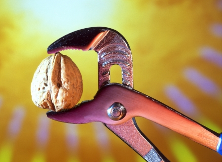 cracking: Concept image  Tough Nut to Crack  cracking walnut in jaws of a pipe grip Stock Photo