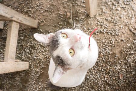 begging: cat begging for food