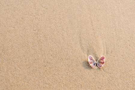 beach butterfly: Sea shell (look like butterfly) on sand beach with copy space. Top view