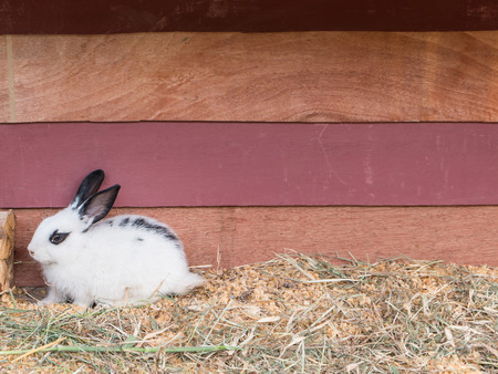 rabbit in cage: White rabbit sit at wooden cage with copy space Stock Photo