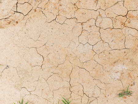 surviving: Plant surviving in dry and cracked ground Stock Photo