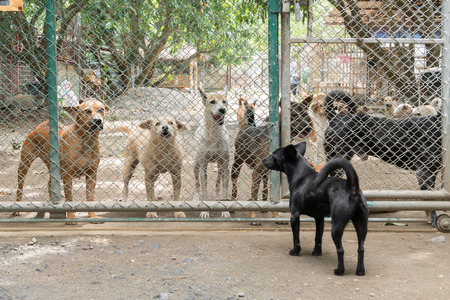 Group of stray dogs in Foundation