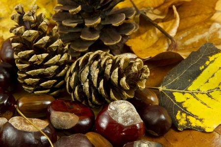 An autumn background created of leaves, cones, chestnuts and acorns Stock Photo