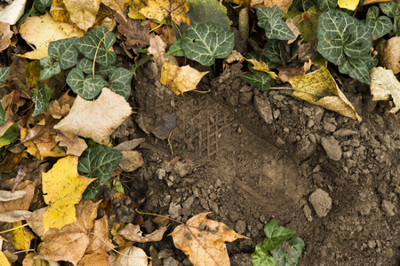 Footprint among the leaves in the woods Stock Photo