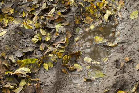 Mud and leaves after rain Stock Photo