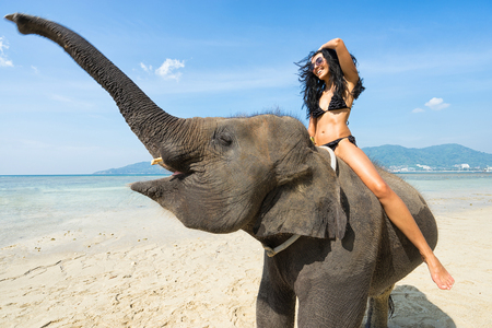 young girl bath: Young happy woman on elephant in the sea. Tropical vacation